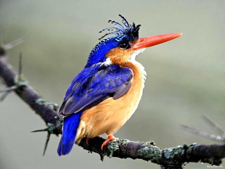 Bird Watching Tours in Kenya